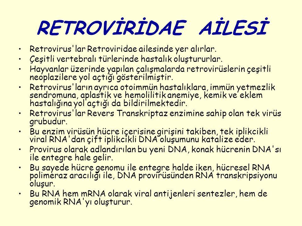 RETROVİRİDAE AİLESİ Retrovirus'lar Retroviridae ailesinde yer alırlar. Çeşitli vertebralı türlerinde hastalık oluştururlar. Hayvanlar üzerinde yapılan