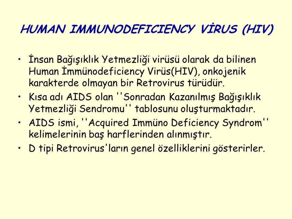 HUMAN IMMUNODEFICIENCY VİRUS (HIV) İnsan Bağışıklık Yetmezliği virüsü olarak da bilinen Human İmmünodeficiency Virüs(HIV), onkojenik karakterde olmayan bir Retrovirus türüdür.