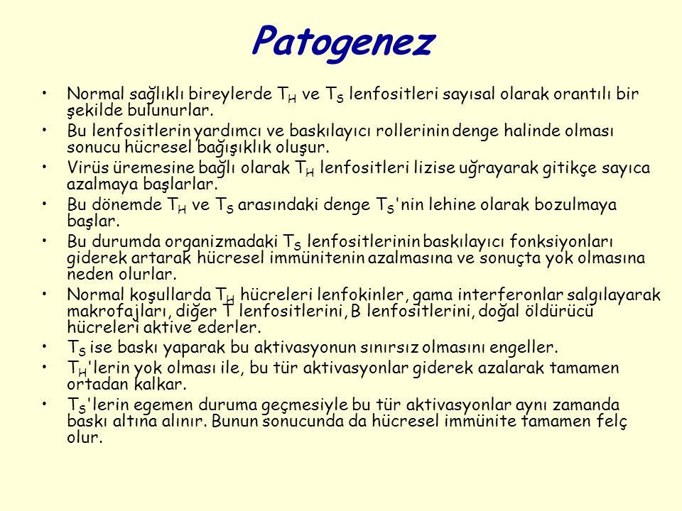Patogenez Normal sağlıklı bireylerde T H ve T S lenfositleri sayısal olarak orantılı bir şekilde bulunurlar.