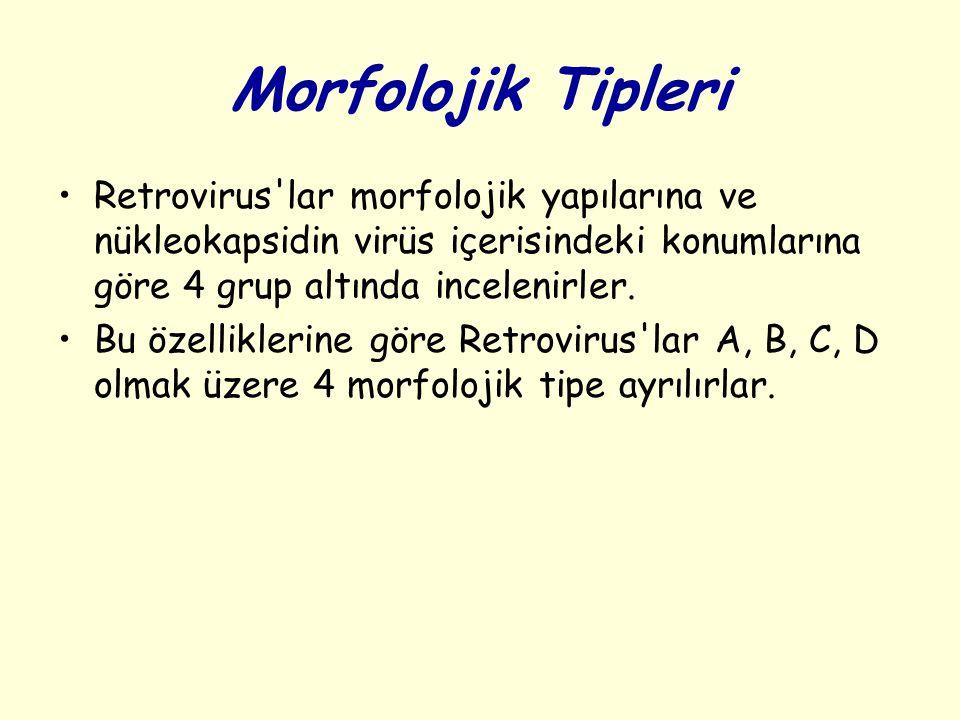 Morfolojik Tipleri Retrovirus'lar morfolojik yapılarına ve nükleokapsidin virüs içerisindeki konumlarına göre 4 grup altında incelenirler. Bu özellikl