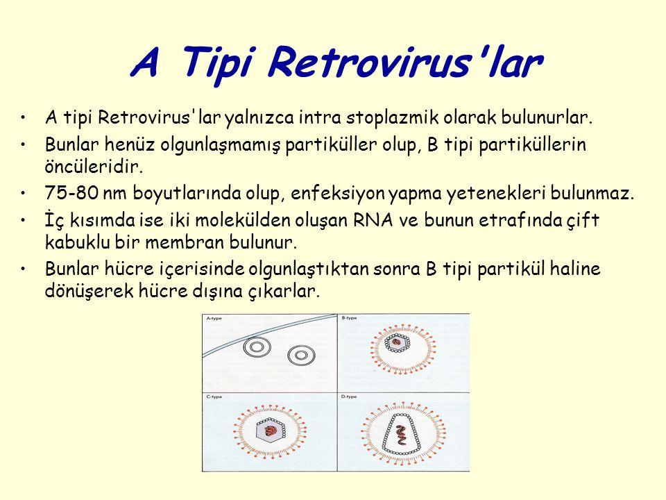 A Tipi Retrovirus'lar A tipi Retrovirus'lar yalnızca intra stoplazmik olarak bulunurlar. Bunlar henüz olgunlaşmamış partiküller olup, B tipi partiküll
