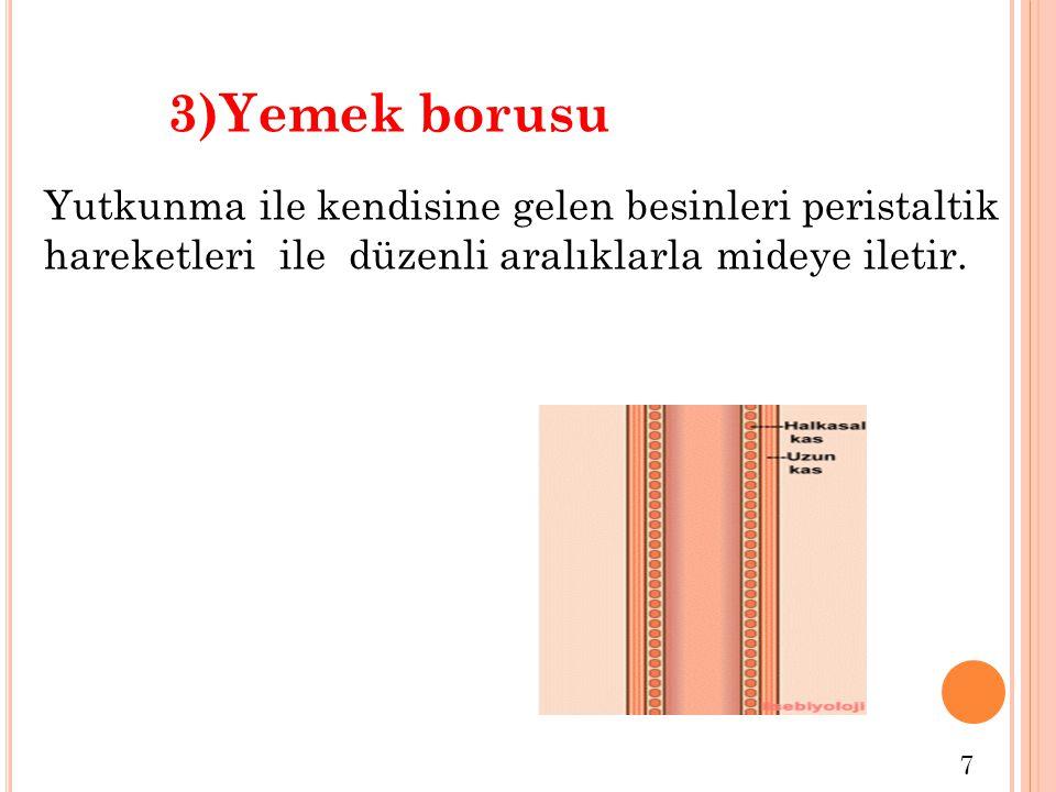 Görevi  Depolama  Mekanik sindirim  Kimyasal sindirim  İletim  Mikroorganizmaların öldürülmesi  Emilim 4)Mide 8