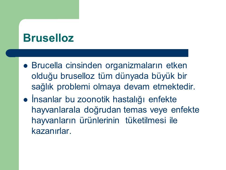 Bruselloz Brucella cinsinden organizmaların etken olduğu bruselloz tüm dünyada büyük bir sağlık problemi olmaya devam etmektedir. İnsanlar bu zoonotik