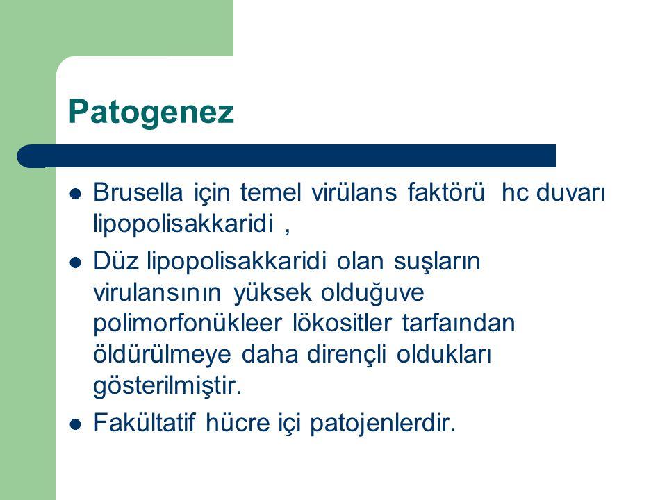 Patogenez Brusella için temel virülans faktörü hc duvarı lipopolisakkaridi, Düz lipopolisakkaridi olan suşların virulansının yüksek olduğuve polimorfo
