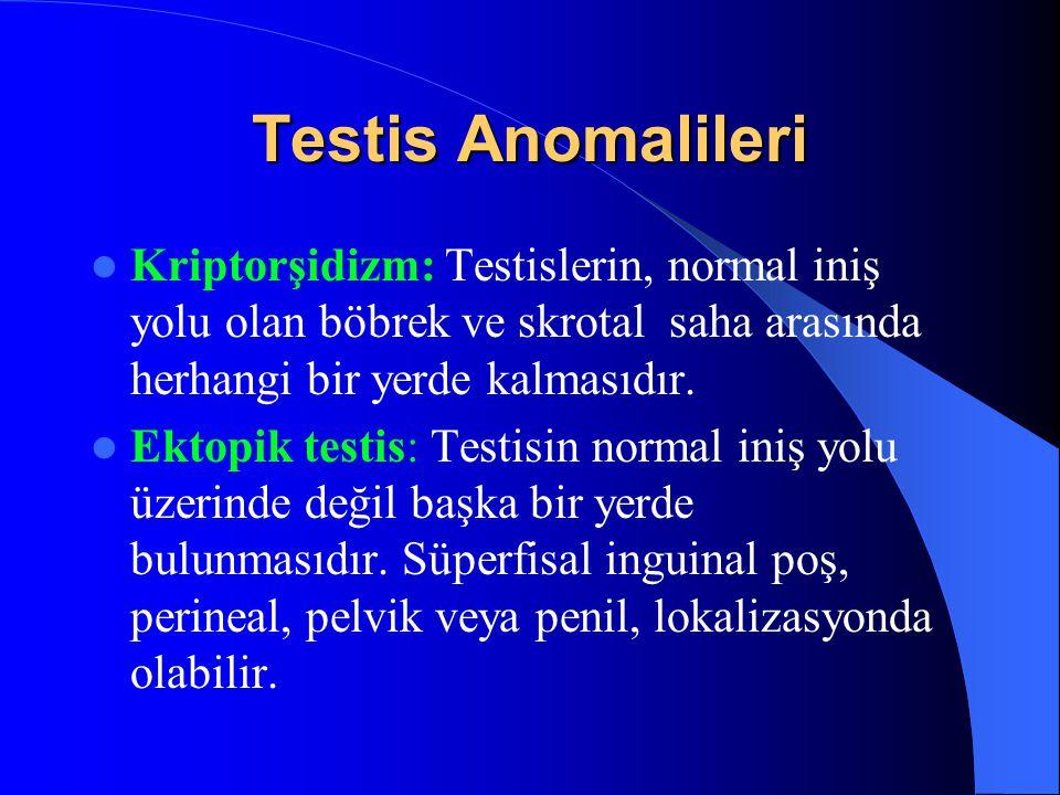 Testis Anomalileri Kriptorşidizm: Testislerin, normal iniş yolu olan böbrek ve skrotal saha arasında herhangi bir yerde kalmasıdır. Ektopik testis: Te