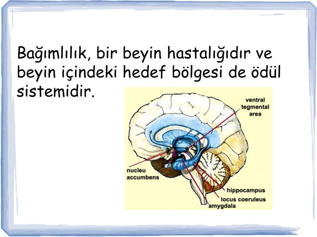 Bağımlılık, bir beyin hastalığıdır ve beyin içindeki hedef bölgesi de ödül sistemidir.