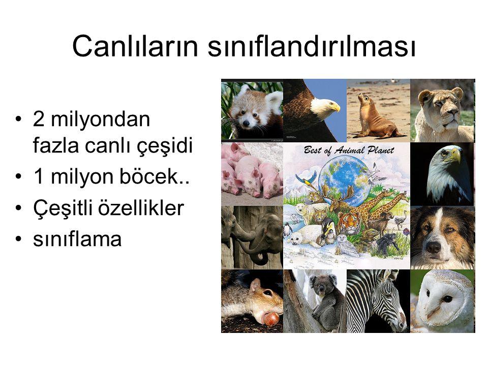 Canlıların sınıflandırılması 2 milyondan fazla canlı çeşidi 1 milyon böcek.. Çeşitli özellikler sınıflama