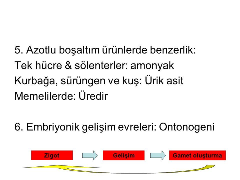 5. Azotlu boşaltım ürünlerde benzerlik: Tek hücre & sölenterler: amonyak Kurbağa, sürüngen ve kuş: Ürik asit Memelilerde: Üredir 6. Embriyonik gelişim
