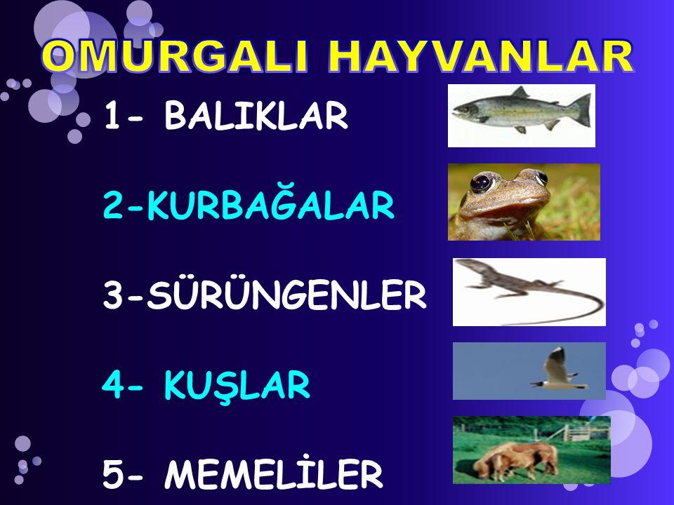 Balıklar, kurbağalar ve sürüngenlerin vücut sıcaklıkları ortam sıcaklığına göre değişir.
