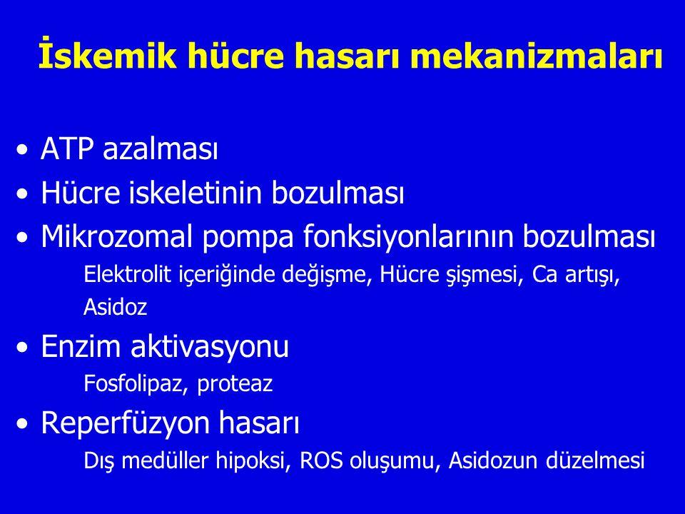 İskemik hücre hasarı mekanizmaları ATP azalması Hücre iskeletinin bozulması Mikrozomal pompa fonksiyonlarının bozulması Elektrolit içeriğinde değişme, Hücre şişmesi, Ca artışı, Asidoz Enzim aktivasyonu Fosfolipaz, proteaz Reperfüzyon hasarı Dış medüller hipoksi, ROS oluşumu, Asidozun düzelmesi