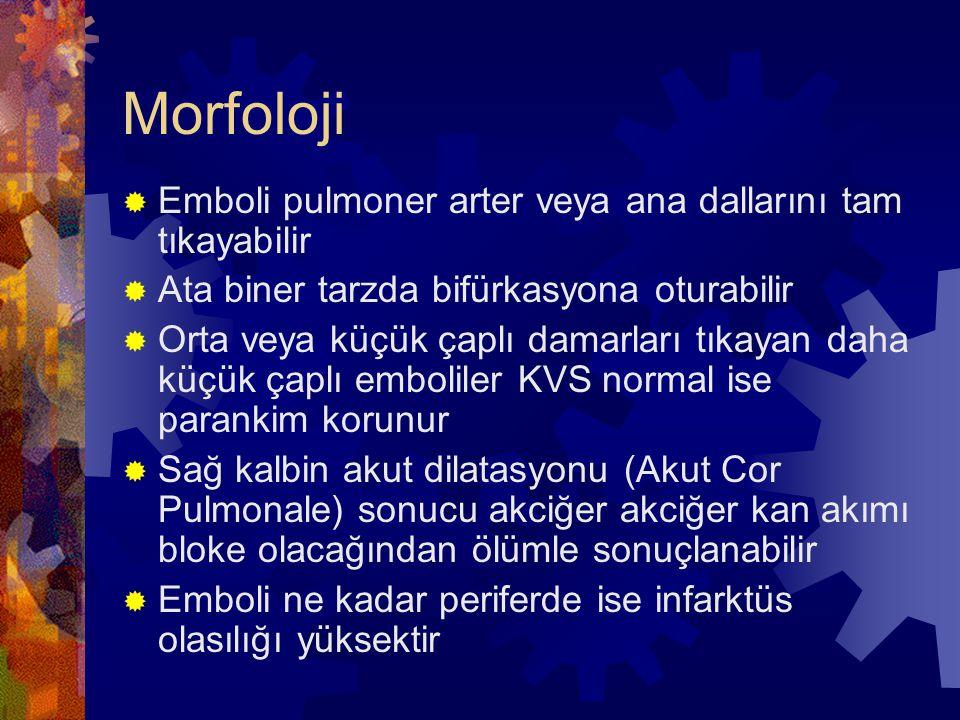 Morfoloji  Emboli pulmoner arter veya ana dallarını tam tıkayabilir  Ata biner tarzda bifürkasyona oturabilir  Orta veya küçük çaplı damarları tıka