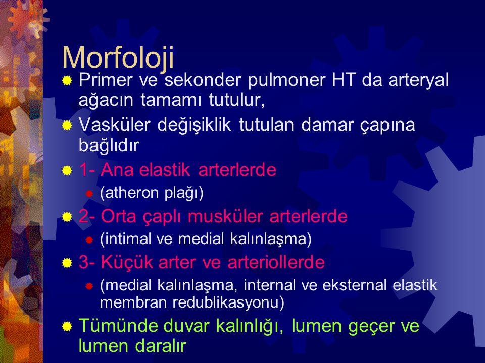 Morfoloji  Primer ve sekonder pulmoner HT da arteryal ağacın tamamı tutulur,  Vasküler değişiklik tutulan damar çapına bağlıdır  1- Ana elastik art