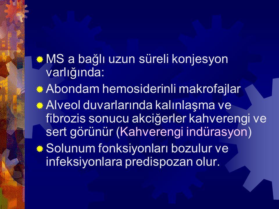  MS a bağlı uzun süreli konjesyon varlığında:  Abondam hemosiderinli makrofajlar  Alveol duvarlarında kalınlaşma ve fibrozis sonucu akciğerler kahv