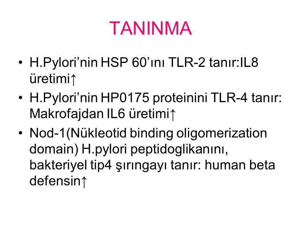 TANINMA H.Pylori'nin HSP 60'ını TLR-2 tanır:IL8 üretimi↑ H.Pylori'nin HP0175 proteinini TLR-4 tanır: Makrofajdan IL6 üretimi↑ Nod-1(Nükleotid binding oligomerization domain) H.pylori peptidoglikanını, bakteriyel tip4 şırıngayı tanır: human beta defensin↑