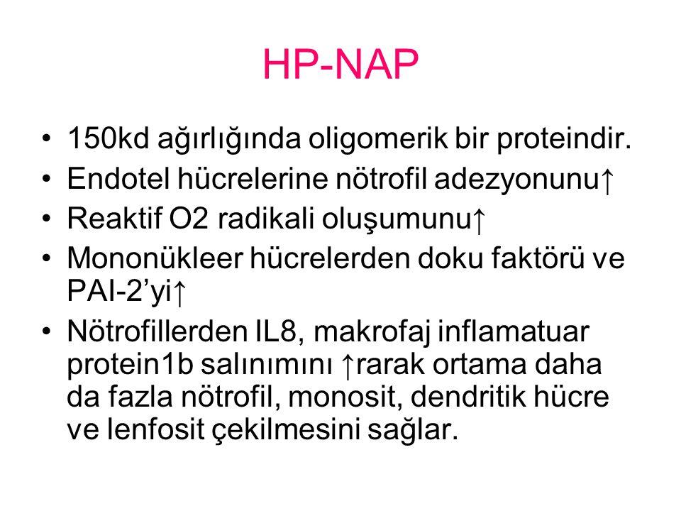 HP-NAP 150kd ağırlığında oligomerik bir proteindir.