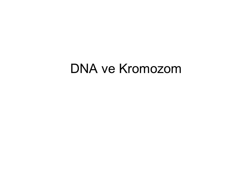 DNA Molecules are highly condensed in chromosomes Nucleosomes of interphase under electron microscope Nucleosome: basic level of chromosome/chromatin organization Chromatin: protein-DNA complex Histone: DNA binding protein A: diameter 30 nm; B: further unfolding, beads on a string conformation