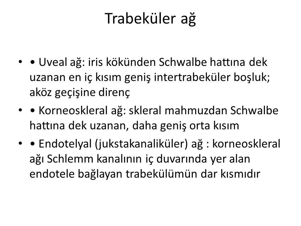 Trabeküler ağ Uveal ağ: iris kökünden Schwalbe hattına dek uzanan en iç kısım geniş intertrabeküler boşluk; aköz geçişine direnç Korneoskleral ağ: skl