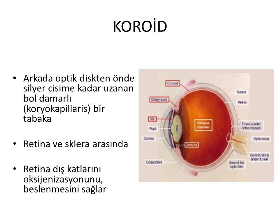 KOROİD Arkada optik diskten önde silyer cisime kadar uzanan bol damarlı (koryokapillaris) bir tabaka Retina ve sklera arasında Retina dış katlarını ok