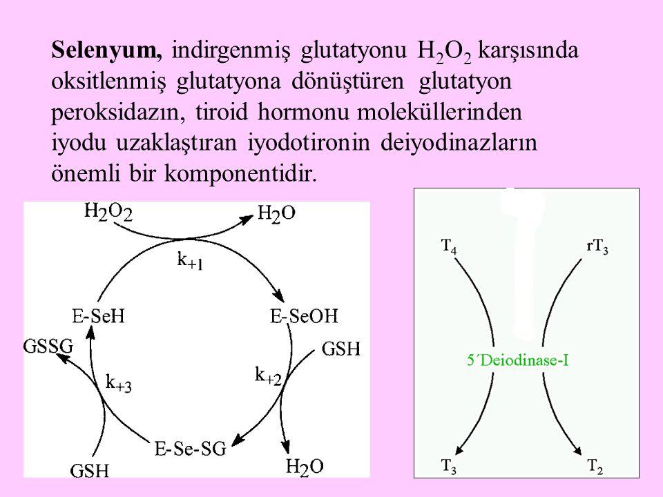 26 Selenyum, indirgenmiş glutatyonu H 2 O 2 karşısında oksitlenmiş glutatyona dönüştüren glutatyon peroksidazın, tiroid hormonu moleküllerinden iyodu