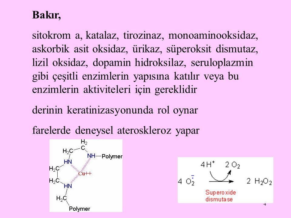 4 Bakır, sitokrom a, katalaz, tirozinaz, monoaminooksidaz, askorbik asit oksidaz, ürikaz, süperoksit dismutaz, lizil oksidaz, dopamin hidroksilaz, ser