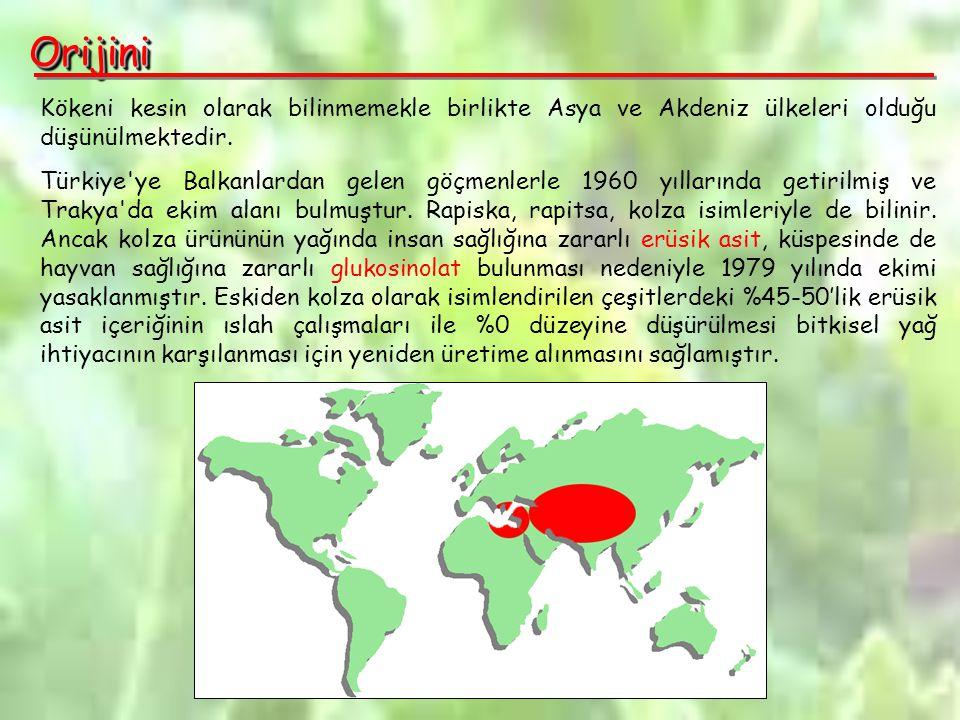 OrijiniOrijini Kökeni kesin olarak bilinmemekle birlikte Asya ve Akdeniz ülkeleri olduğu düşünülmektedir.