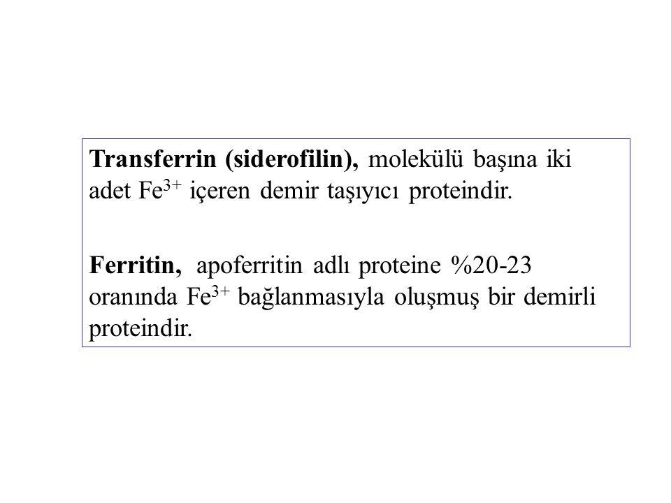 Transferrin (siderofilin), molekülü başına iki adet Fe 3+ içeren demir taşıyıcı proteindir. Ferritin, apoferritin adlı proteine %20-23 oranında Fe 3+