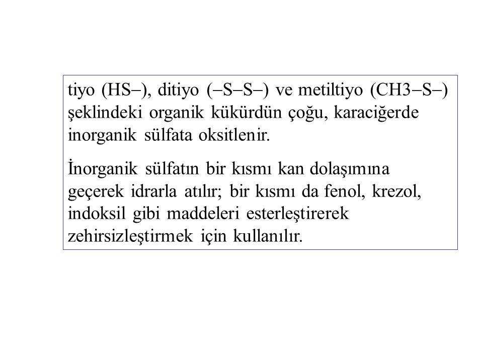 tiyo (HS  ), ditiyo (  S  S  ) ve metiltiyo (CH3  S  ) şeklindeki organik kükürdün çoğu, karaciğerde inorganik sülfata oksitlenir. İnorganik sül
