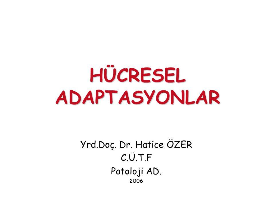 HÜCRESEL ADAPTASYONLAR Yrd.Doç. Dr. Hatice ÖZER C.Ü.T.F Patoloji AD. 2006