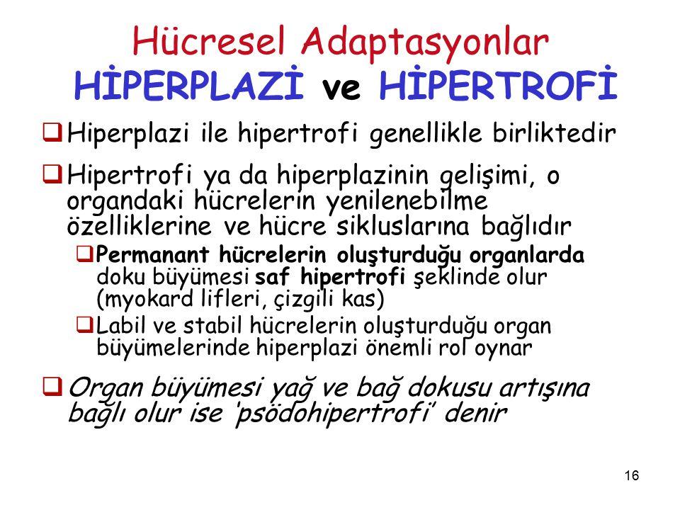 16 Hücresel Adaptasyonlar HİPERPLAZİ ve HİPERTROFİ  Hiperplazi ile hipertrofi genellikle birliktedir  Hipertrofi ya da hiperplazinin gelişimi, o organdaki hücrelerin yenilenebilme özelliklerine ve hücre sikluslarına bağlıdır  Permanant hücrelerin oluşturduğu organlarda doku büyümesi saf hipertrofi şeklinde olur (myokard lifleri, çizgili kas)  Labil ve stabil hücrelerin oluşturduğu organ büyümelerinde hiperplazi önemli rol oynar  Organ büyümesi yağ ve bağ dokusu artışına bağlı olur ise 'psödohipertrofi' denir