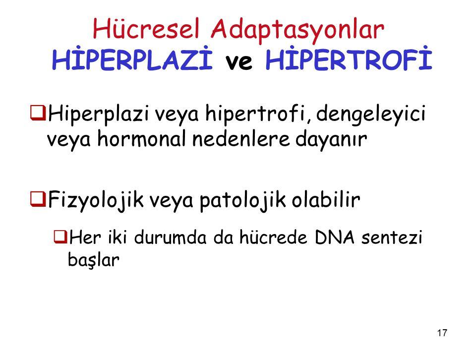 17 Hücresel Adaptasyonlar HİPERPLAZİ ve HİPERTROFİ  Hiperplazi veya hipertrofi, dengeleyici veya hormonal nedenlere dayanır  Fizyolojik veya patolojik olabilir  Her iki durumda da hücrede DNA sentezi başlar