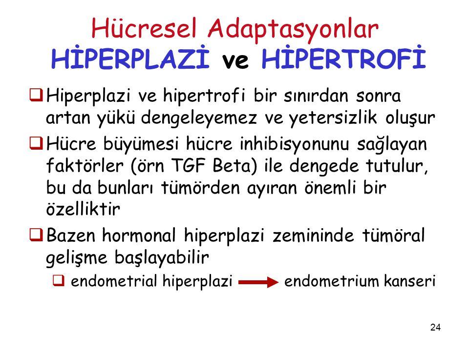 24 Hücresel Adaptasyonlar HİPERPLAZİ ve HİPERTROFİ  Hiperplazi ve hipertrofi bir sınırdan sonra artan yükü dengeleyemez ve yetersizlik oluşur  Hücre büyümesi hücre inhibisyonunu sağlayan faktörler (örn TGF Beta) ile dengede tutulur, bu da bunları tümörden ayıran önemli bir özelliktir  Bazen hormonal hiperplazi zemininde tümöral gelişme başlayabilir  endometrial hiperplazi endometrium kanseri