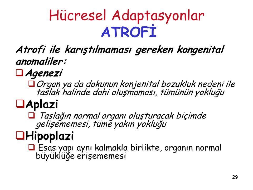 29 Hücresel Adaptasyonlar ATROFİ Atrofi ile karıştılmaması gereken kongenital anomaliler:  Agenezi  Organ ya da dokunun konjenital bozukluk nedeni i