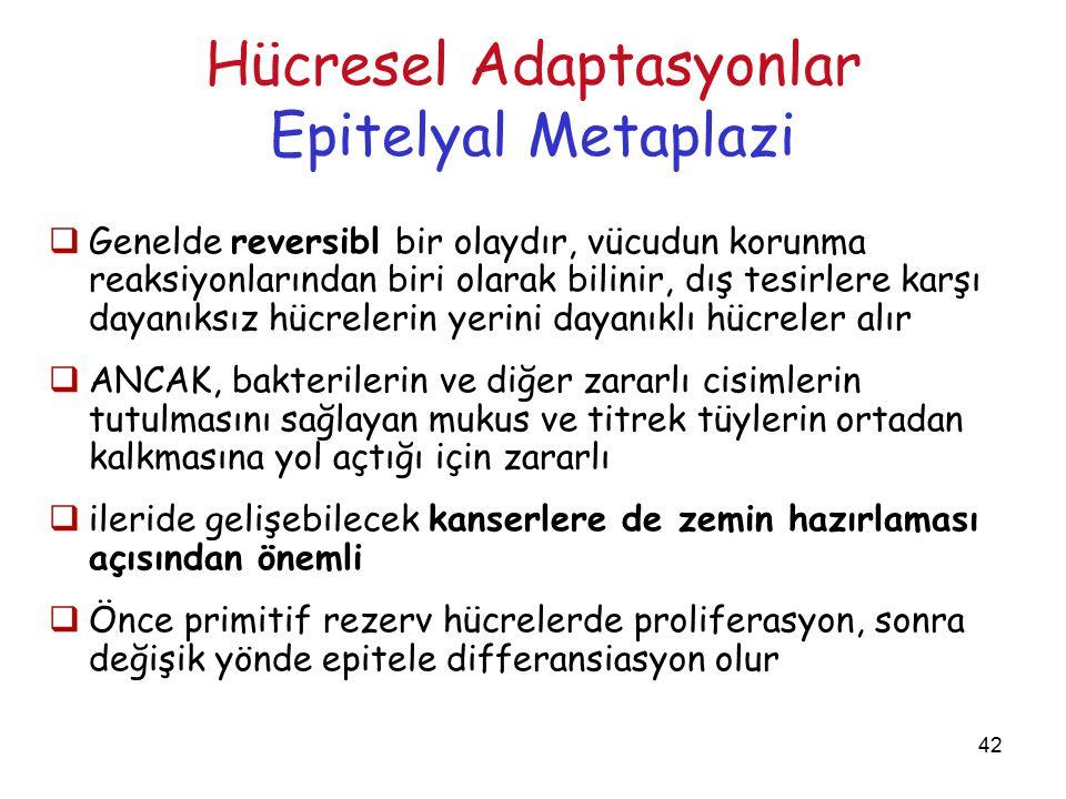 42 Hücresel Adaptasyonlar Epitelyal Metaplazi  Genelde reversibl bir olaydır, vücudun korunma reaksiyonlarından biri olarak bilinir, dış tesirlere ka