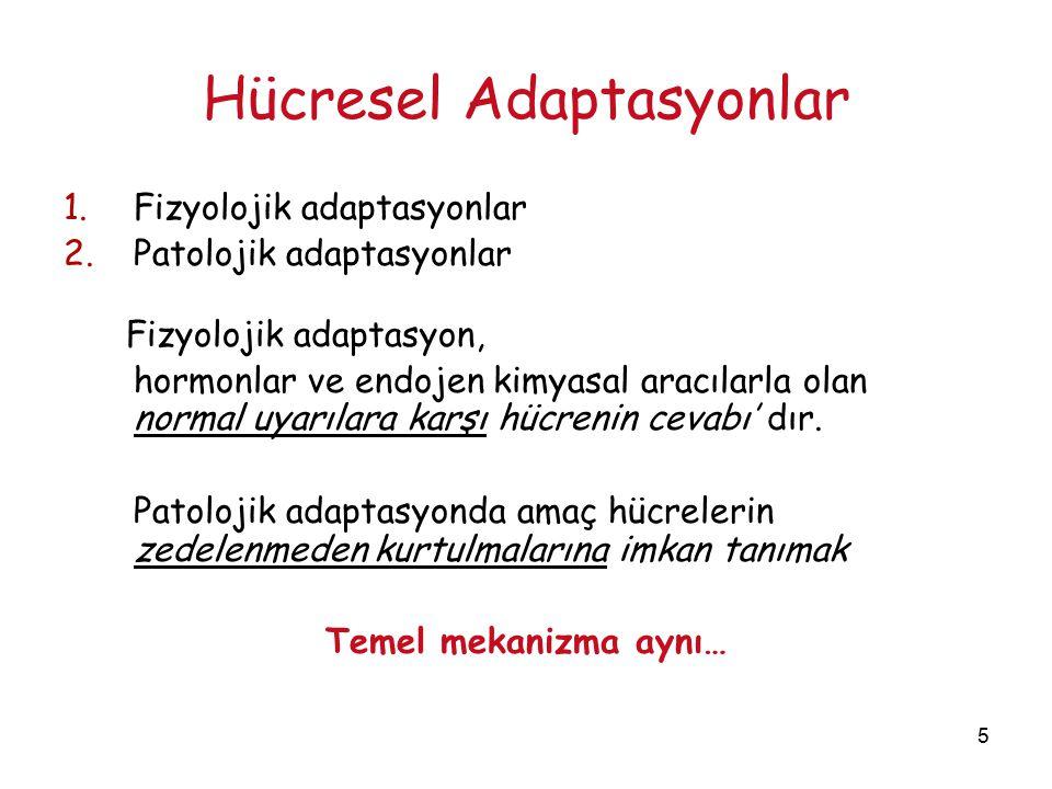 5 Hücresel Adaptasyonlar 1.Fizyolojik adaptasyonlar 2.Patolojik adaptasyonlar Fizyolojik adaptasyon, hormonlar ve endojen kimyasal aracılarla olan nor