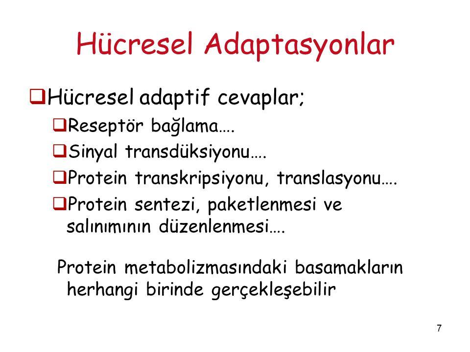 7 Hücresel Adaptasyonlar  Hücresel adaptif cevaplar;  Reseptör bağlama….  Sinyal transdüksiyonu….  Protein transkripsiyonu, translasyonu….  Prote