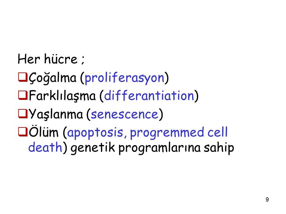 9 Her hücre ;  Çoğalma (proliferasyon)  Farklılaşma (differantiation)  Yaşlanma (senescence)  Ölüm (apoptosis, progremmed cell death) genetik programlarına sahip