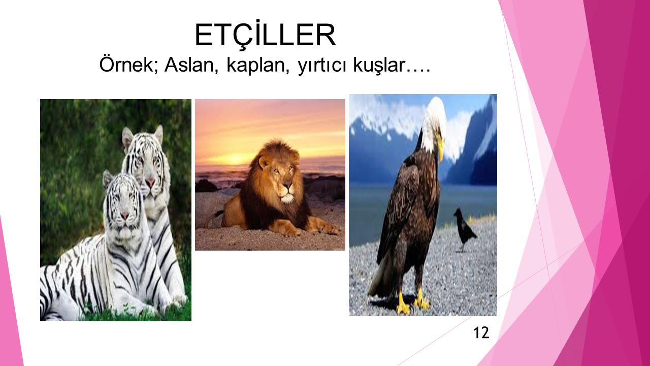 ETÇİLLER Örnek; Aslan, kaplan, yırtıcı kuşlar…. 12