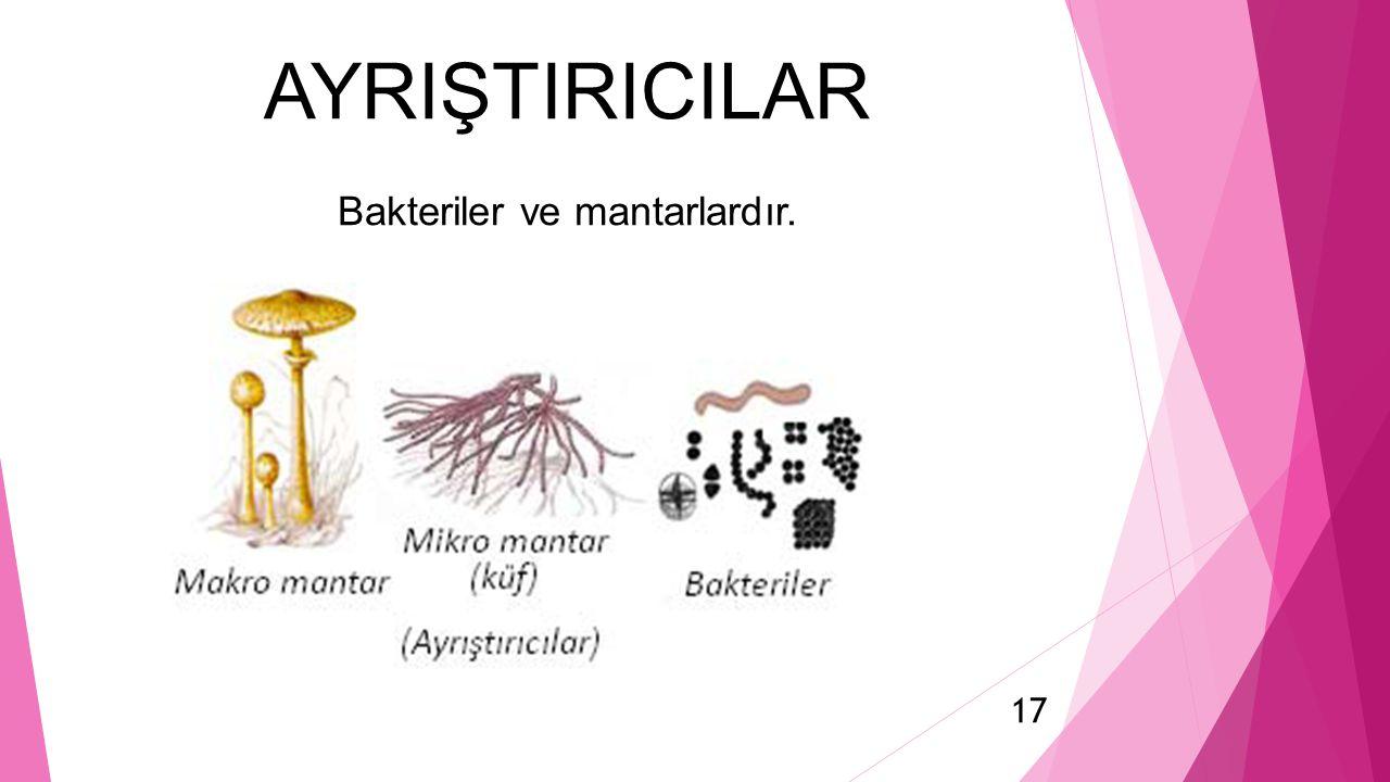 AYRIŞTIRICILAR Bakteriler ve mantarlardır. 17