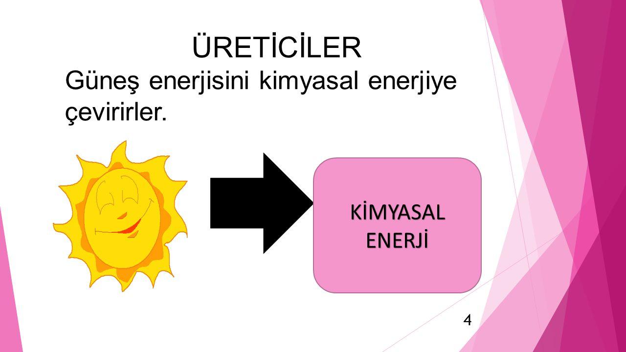 KİMYASAL ENERJİ ÜRETİCİLER Güneş enerjisini kimyasal enerjiye çevirirler. 4