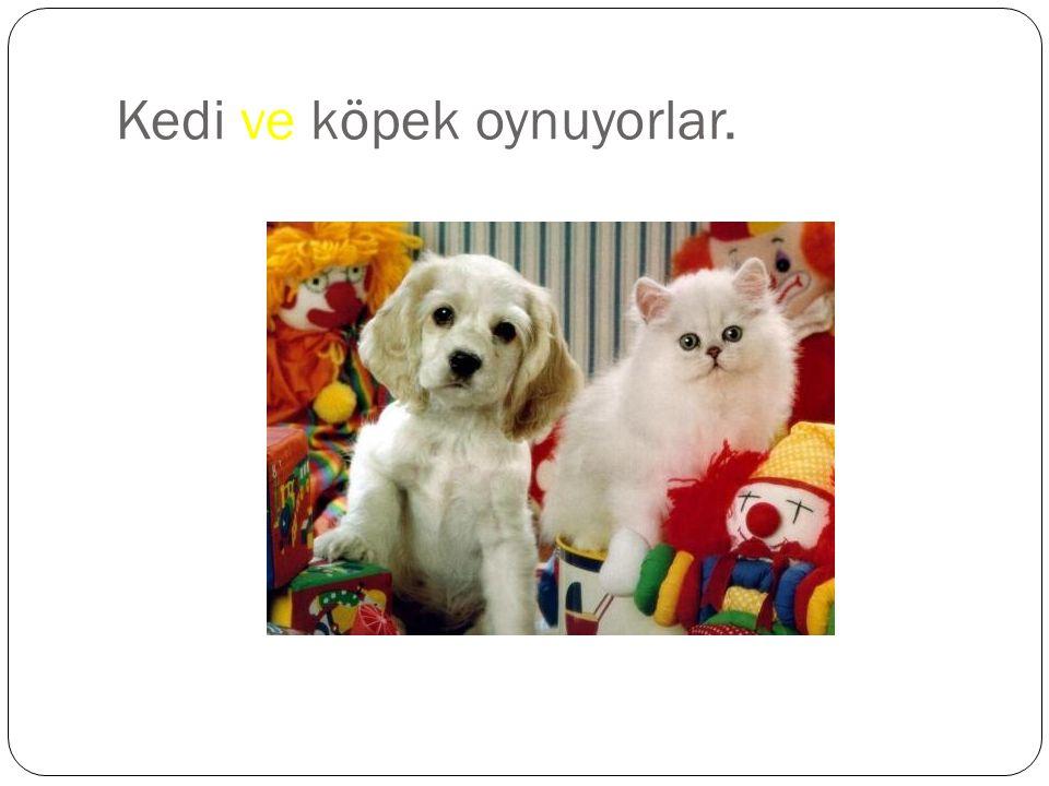 Kedi ve köpek oynuyorlar.