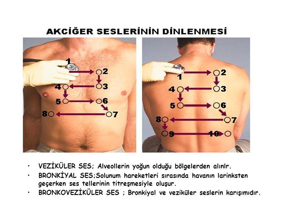VEZİKÜLER SES; Alveollerin yoğun olduğu bölgelerden alınlr. BRONKİYAL SES;Solunum hareketleri sırasında havanın larinksten geçerken ses tellerinin tit