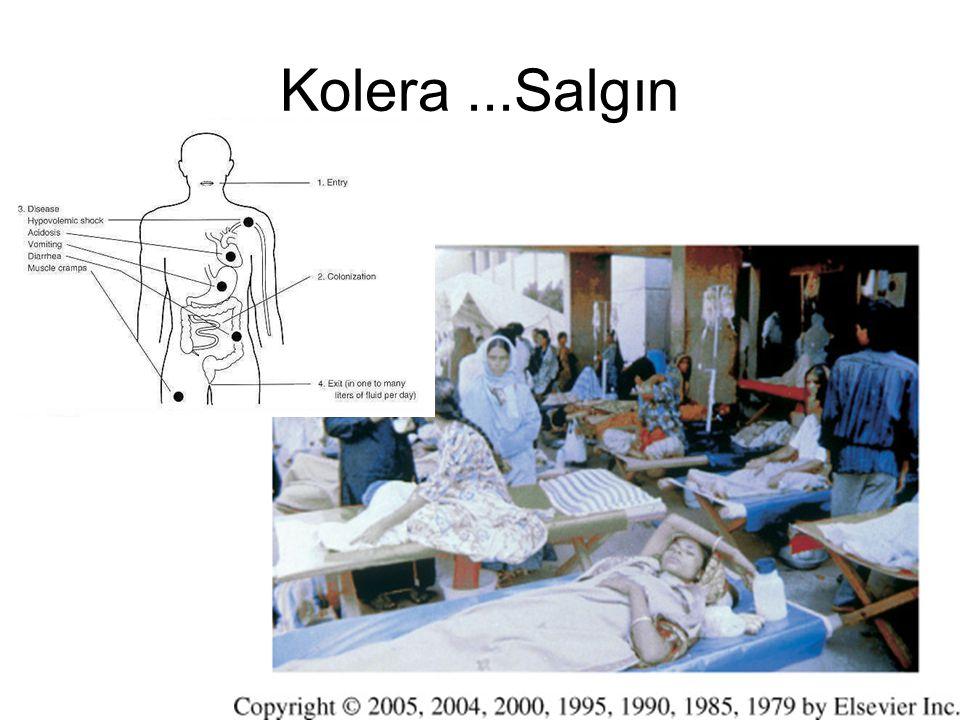 Kolera...Salgın