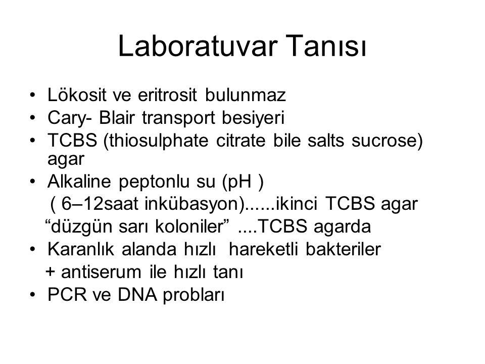 Laboratuvar Tanısı Lökosit ve eritrosit bulunmaz Cary- Blair transport besiyeri TCBS (thiosulphate citrate bile salts sucrose) agar Alkaline peptonlu