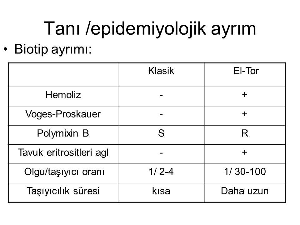 Tanı /epidemiyolojik ayrım Biotip ayrımı: Klasik El-Tor Hemoliz-+ Voges-Proskauer-+ Polymixin BSR Tavuk eritrositleri agl-+ Olgu/taşıyıcı oranı1/ 2-41