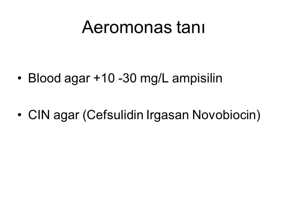 Aeromonas tanı Blood agar +10 -30 mg/L ampisilin CIN agar (Cefsulidin Irgasan Novobiocin)