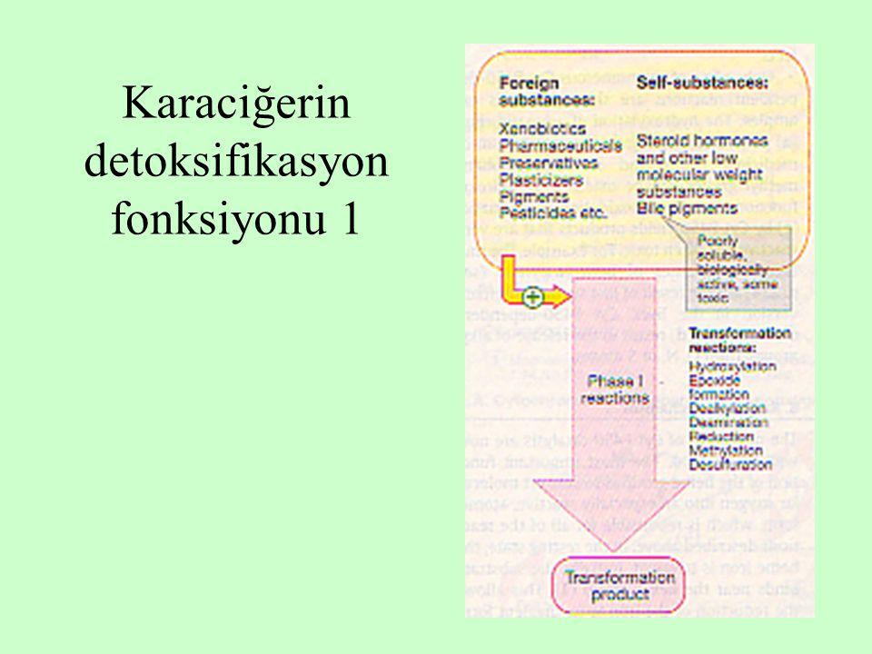 13 Karaciğerin detoksifikasyon fonksiyonu 1
