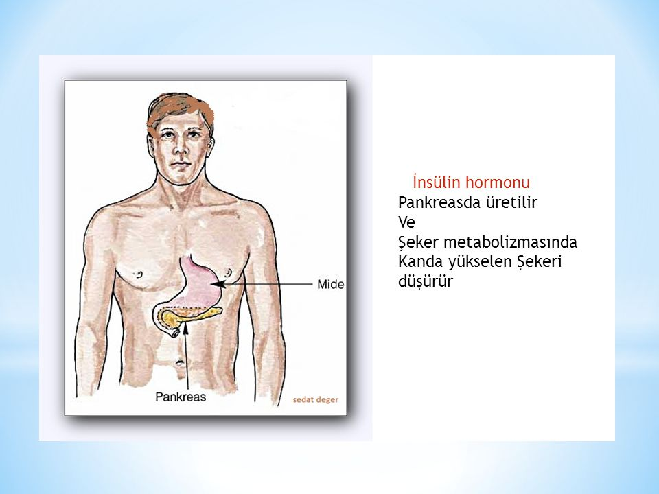 Sindirim sistemi sayesinde sindirilip kana geçmiş olan Glukoz(karbonhidrat) halk arasında bilinen şekliyle şeker İnsülin- glukagon hormon çifti tarafından kontrol edilir.