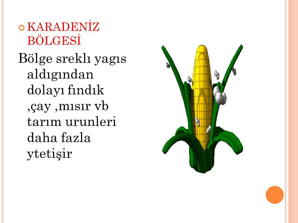 KARADENİZ BÖLGESİ Bölge sreklı yagıs aldıgından dolayı fındık,çay,mısır vb tarım urunleri daha fazla ytetişir