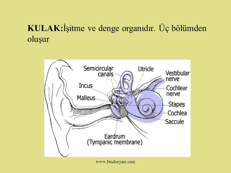 www.fendosyasi.com Renk Körlüğü:Retinada kırmızı, yeşil ve mavi rengi algılayan koni hücreleri vardır.