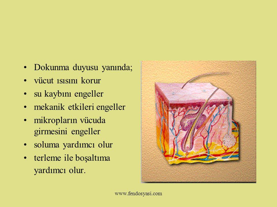 www.fendosyasi.com DERİ:Dokunma duyusunu gerçekleştiren organdır.